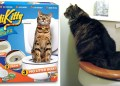 You Can Officially Teach Your Cats to Use a Human Toilet Thanks to This Shark Tank Invention