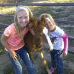 Family Saves Baby Wild Horse Forms Amazing Bond