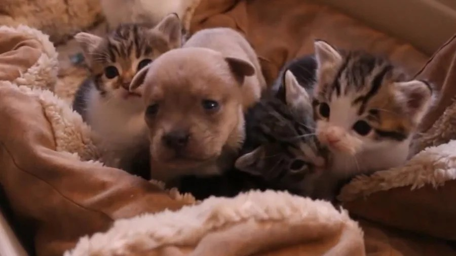 Puppies And Kittens Box