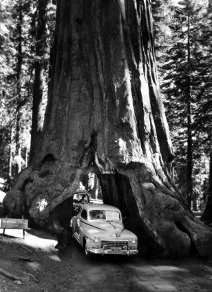 Redwood Confirmed As World S Tallest Tree Technology Science Science Nbc News