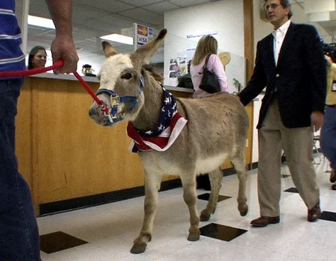 Man Brings Donkey To Testify In Case Us News Weird