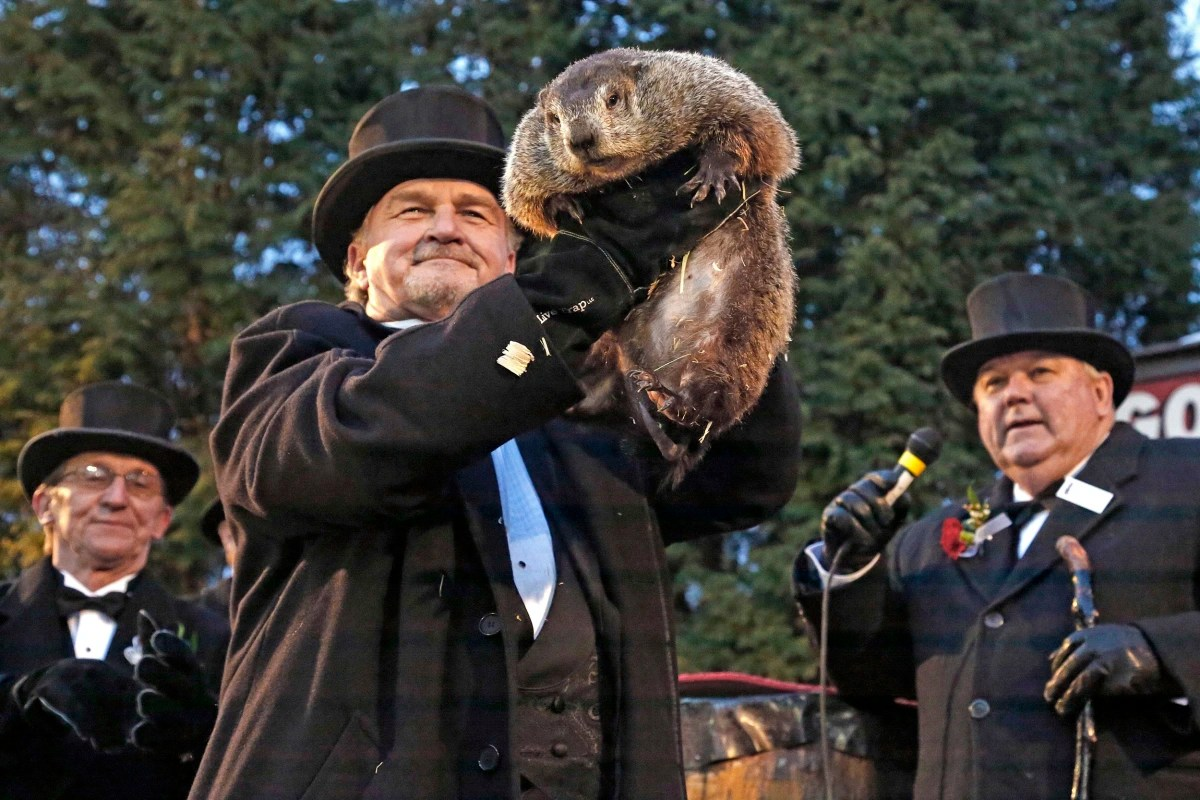 Groundhog Day Spotlights America S Favorite Weather Animal