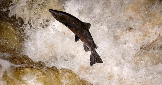 Extinction threatens a third of freshwater fish species, according to report