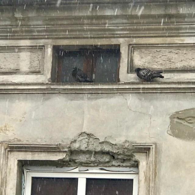 Varken duvorna eller vi diggar dagens vder krakow snblandat