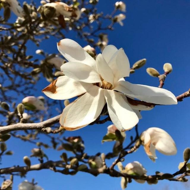 magnolia vr gotland