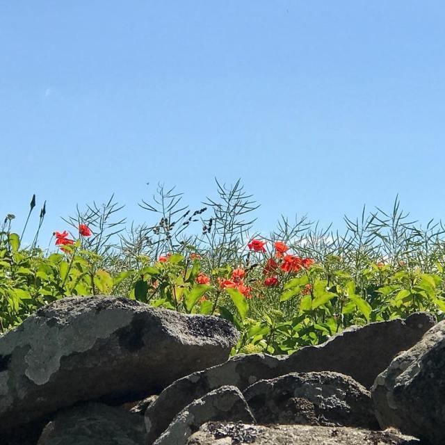 Solvrme ljumma vindar mot huden och grs mellan fingrarna Fgelsnghellip