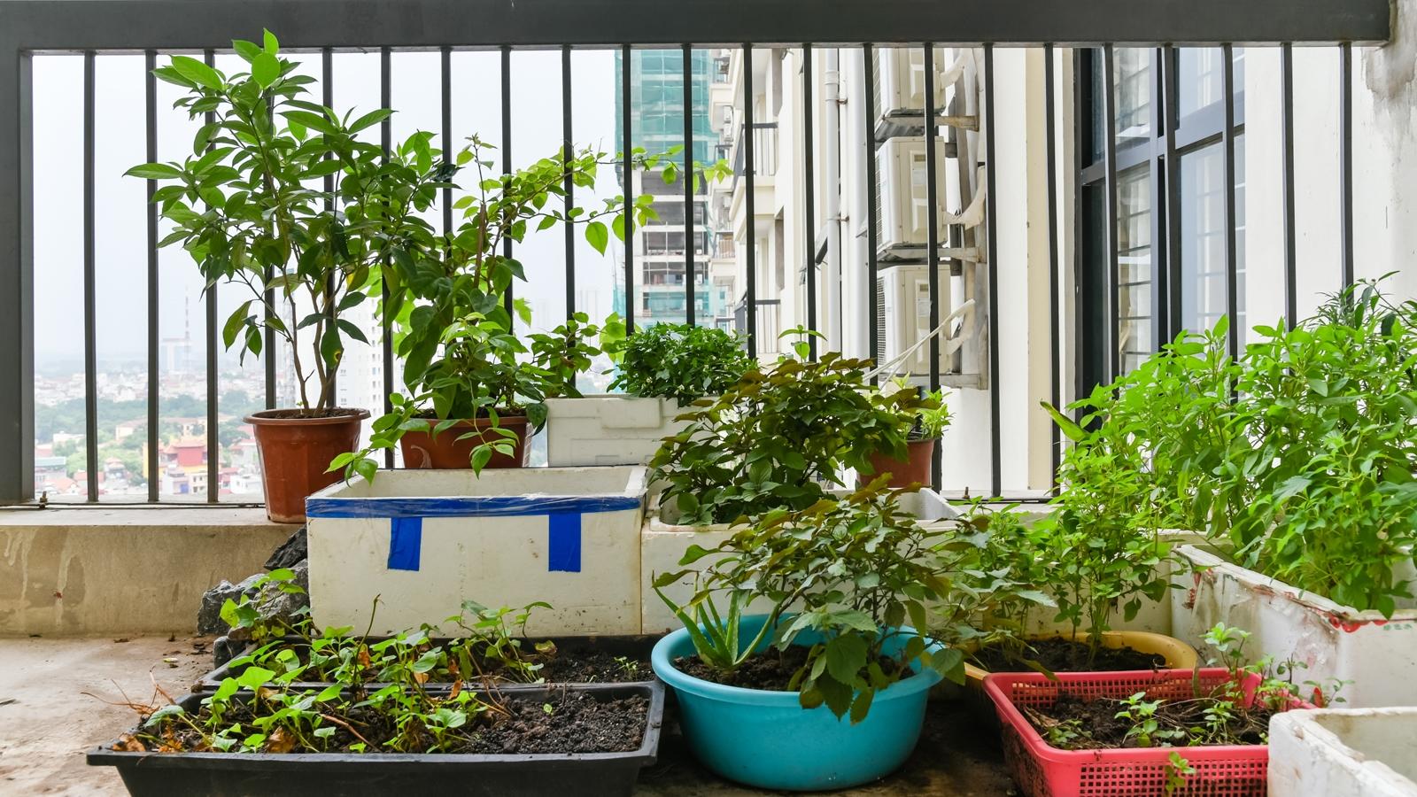 Giardino Sul Balcone Di Casa : Giardino in balcone images argegno appartamento con