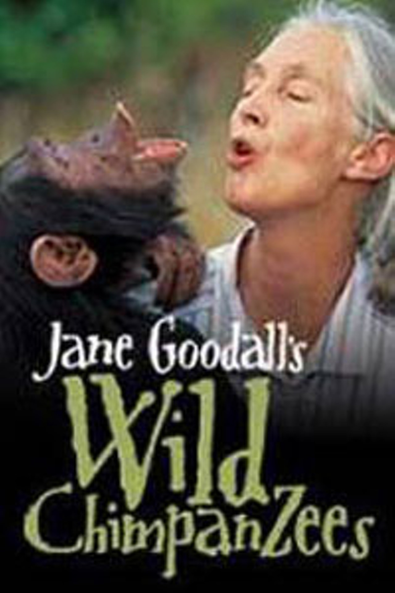 Jane Goodall S Wild Chimpanzees