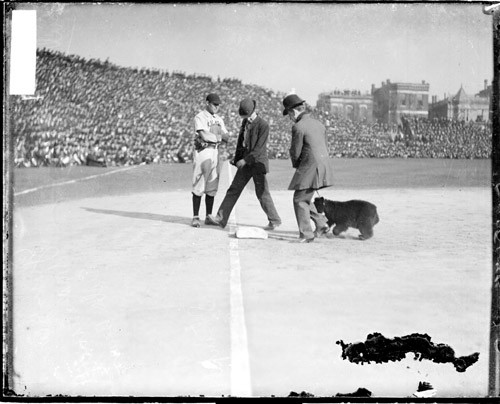 One of the unlucky cubs of 1906.