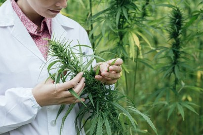 Gov. Doug Ducey recently signed a bill to explore the economic benefit of growing, cultivating and marketing hemp.
