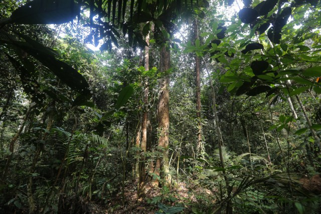 Sabah Forestry Department, Sustainable Forest Management Division chief Musa Salleh said, so far 106 thousand hectares of forest plantations have been developed at a cost of RM1.6 billion. — Picture by Yusof Mat Isa