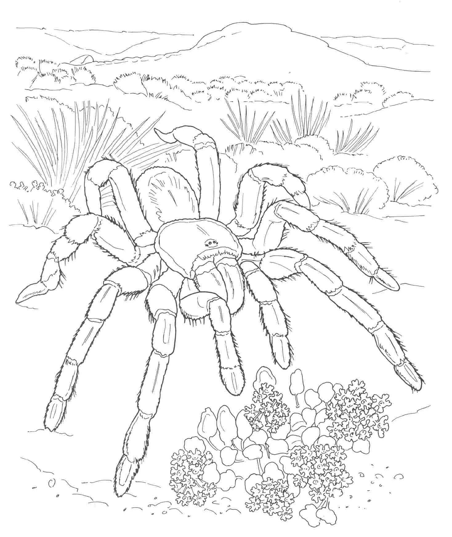 pages desert tarantula