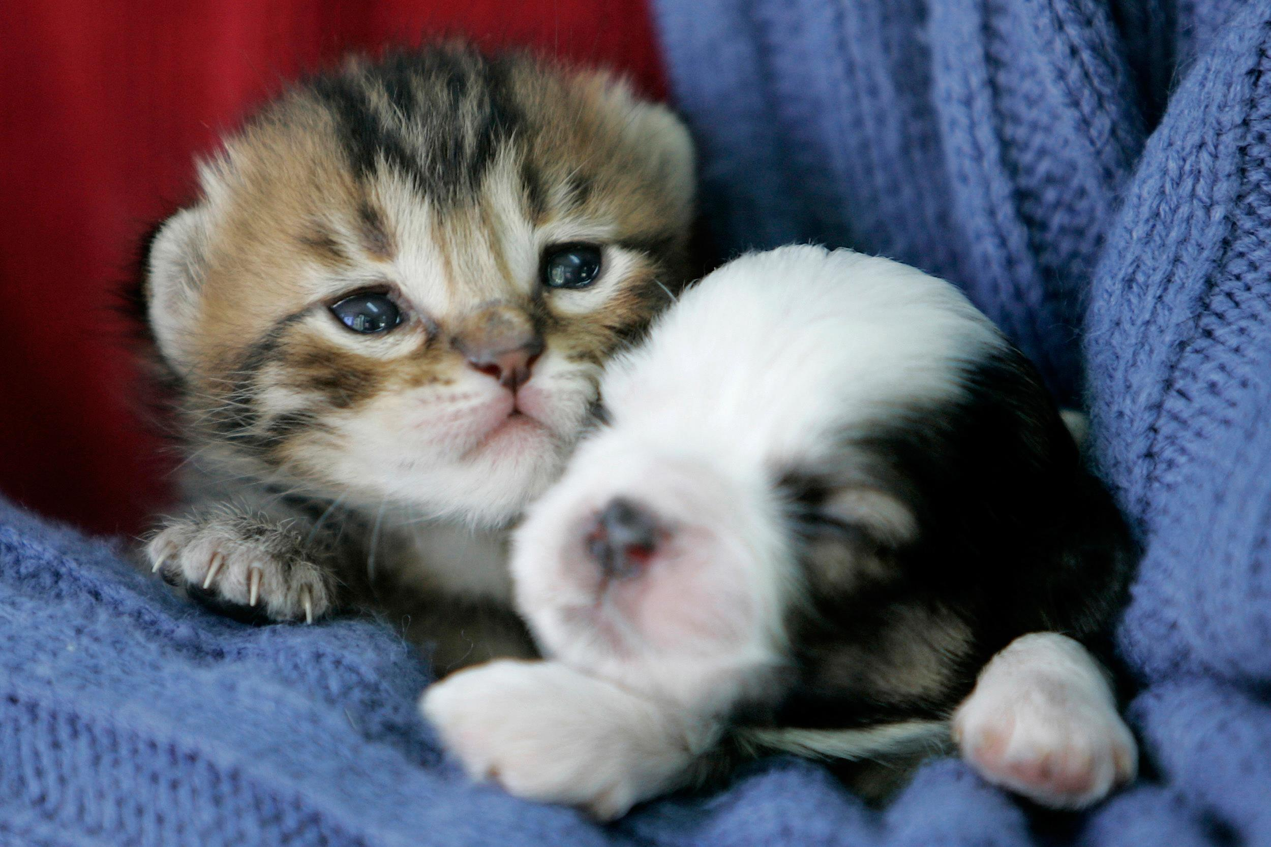 Baby Kittens And Puppies Together
