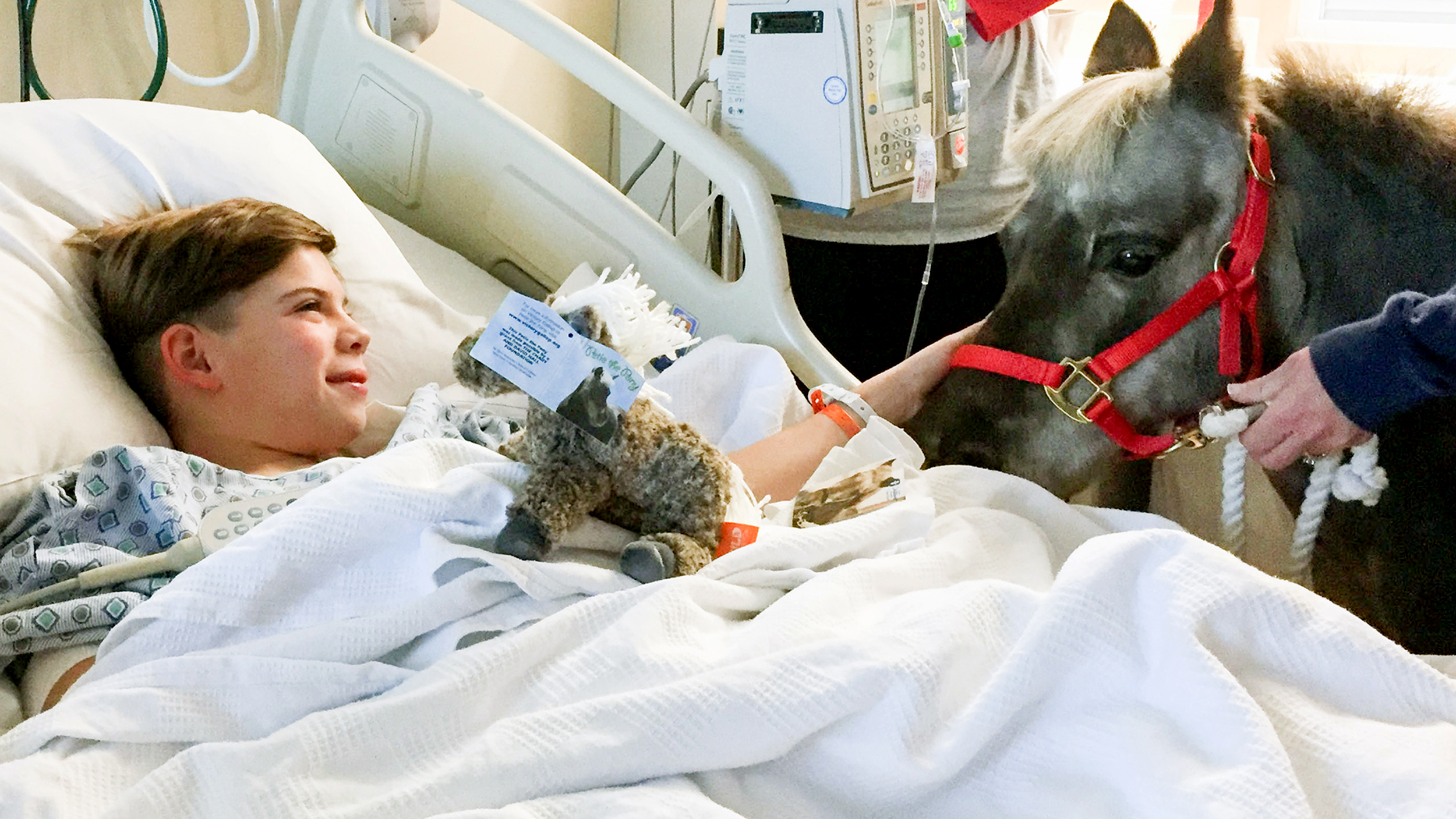Petie The Pony Helps Sick Children Recover From Illness
