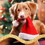 66 Gifts For Dogs Or Dog Lovers To Get In 2020 Today
