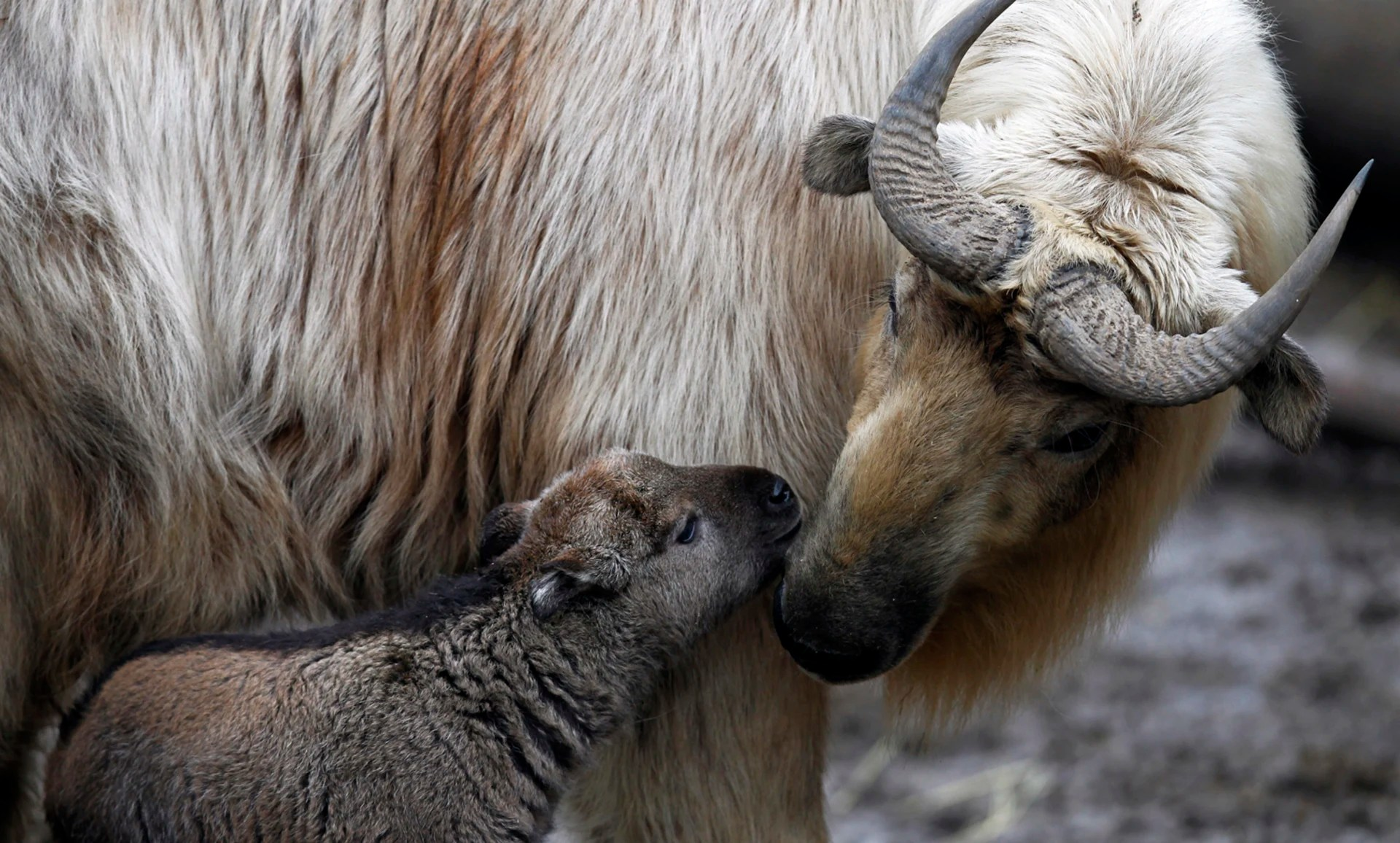 Animal Moms And Their Babies