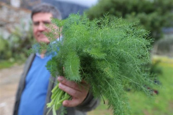 fennel_living_to_100-streams_desktop_large_f4b43ba562ca3a841afc8cbc0095bde3.today-inline-large.jpg