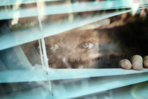 2015-moods-through-my-window-46x30-2