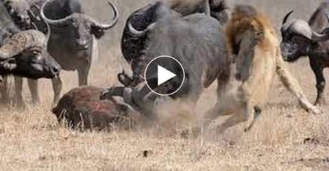 Why Wild Animals Should be Protected