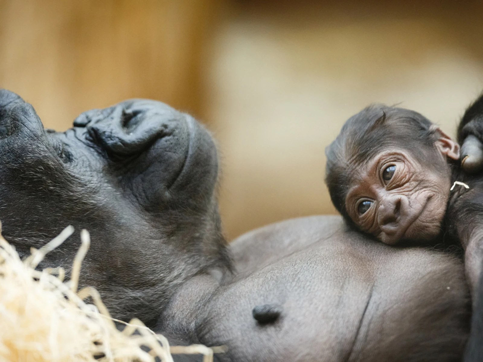Moms Of The Animal Kingdom And Their Babies
