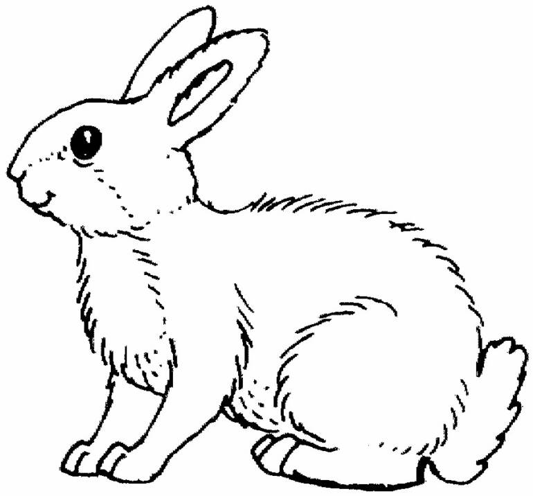 rabbit coloring pages printable to color