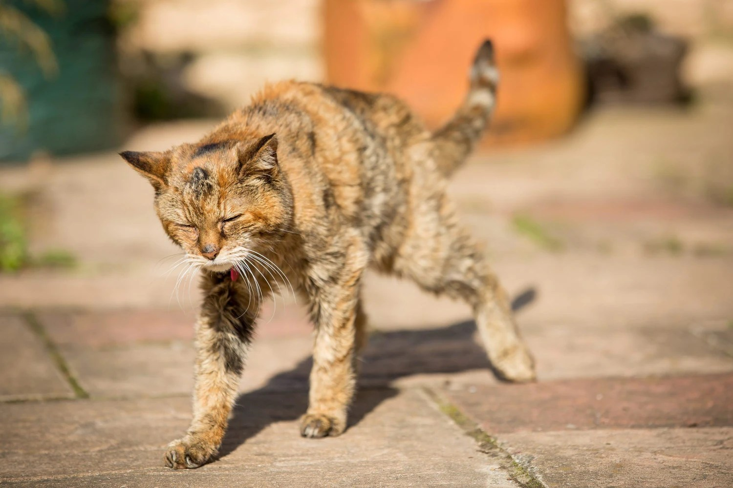 Poppy Is Crowned World S Oldest Living Cat At Age 24