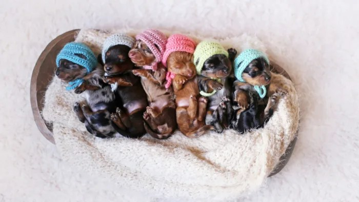 6 Newborn Puppies Fetch Smiles In Photo Shoot With Mom