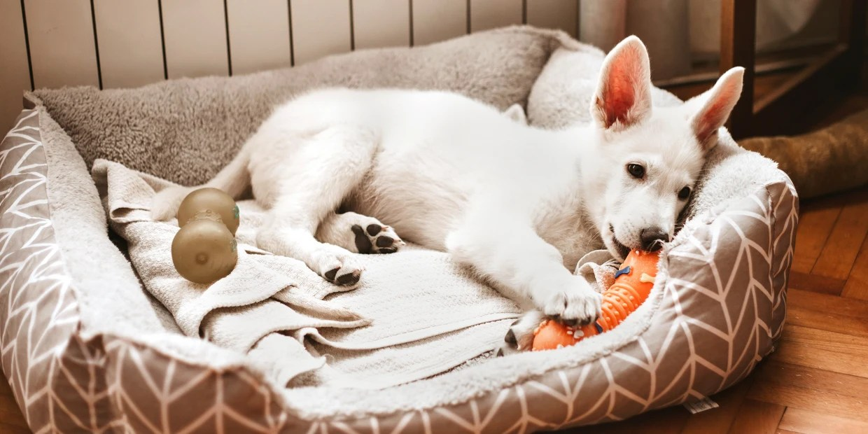 the 14 best dog beds of 2021 according