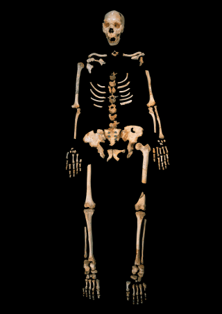 Image: Sima skeleton