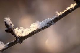 vinterbild-gren med snö