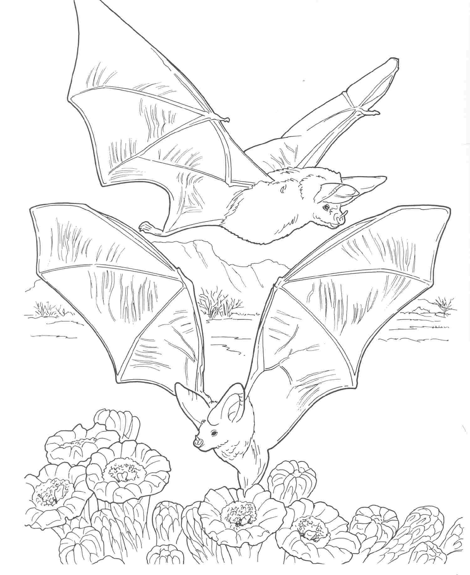 Forest Habitat Coloring Pages Sketch Coloring Page
