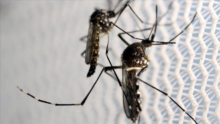 Sénégal : une vingtaine de cas de dengue signalés dans le nord