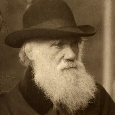 https://www.nhm.ac.uk/discover/charles-darwins-octopus.html