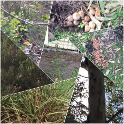 Wetlands01