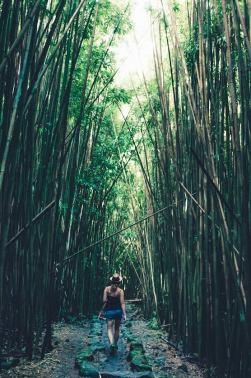 Rear view of female tourist strolling in bamboo grove Haleakala Hawaii USA