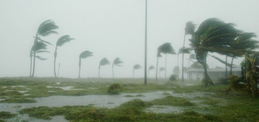 Wind blowing palm trees during hurricane