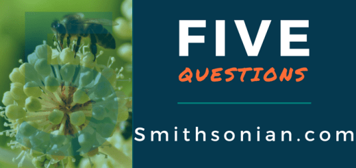 5 Questions Smithsonian.com