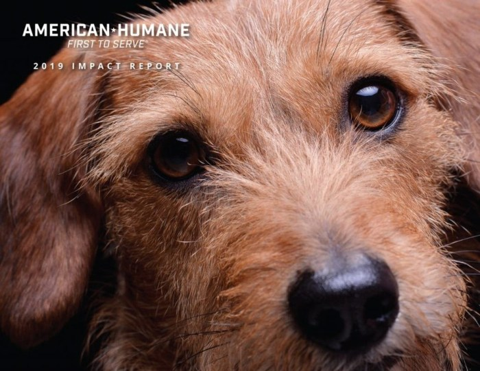 American Humane Impact Report 2019 cover image with a dog