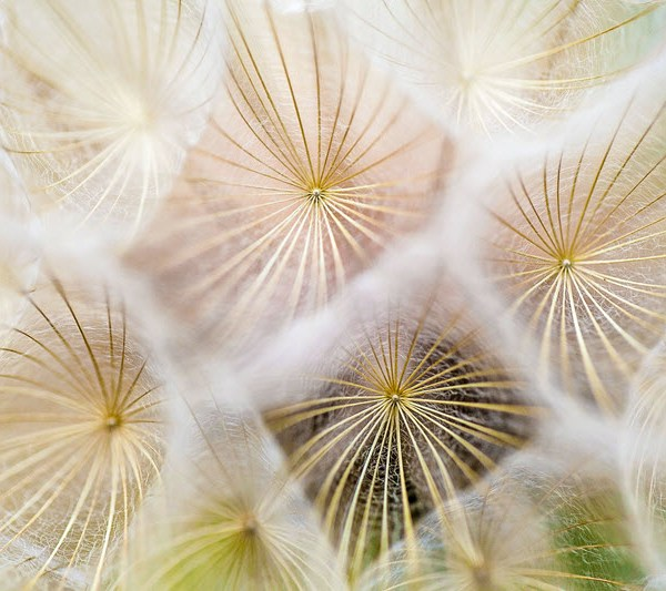 Abstract photo of plants