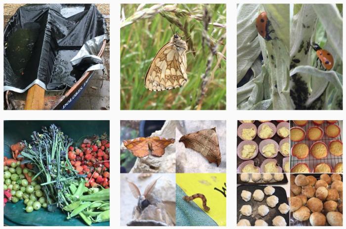 Moth Blogs We Love - @martinsmoths on Instagram