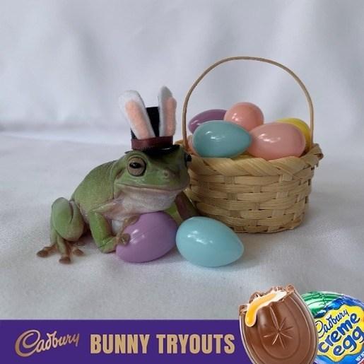 Cadbury bunny