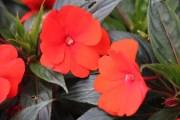 Flores do jardim que as crianças gostaram 2