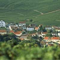 Discover Champagne: France's sleeping giant; The Week