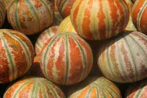 Melons rouges