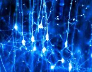 Neurones d'un soir
