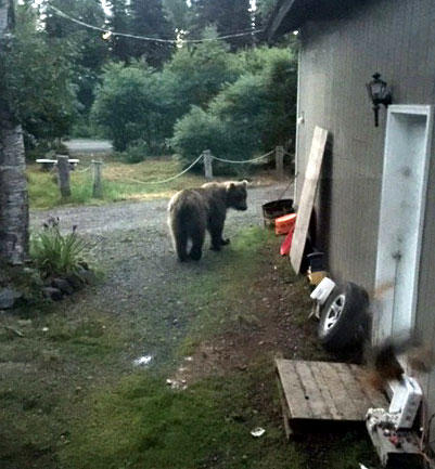 Shannon Clouse Snapped This Photo Of The Bear As It Investigated Her Familys Yard On Its Way Through The Neighborhood Several Families In The Area