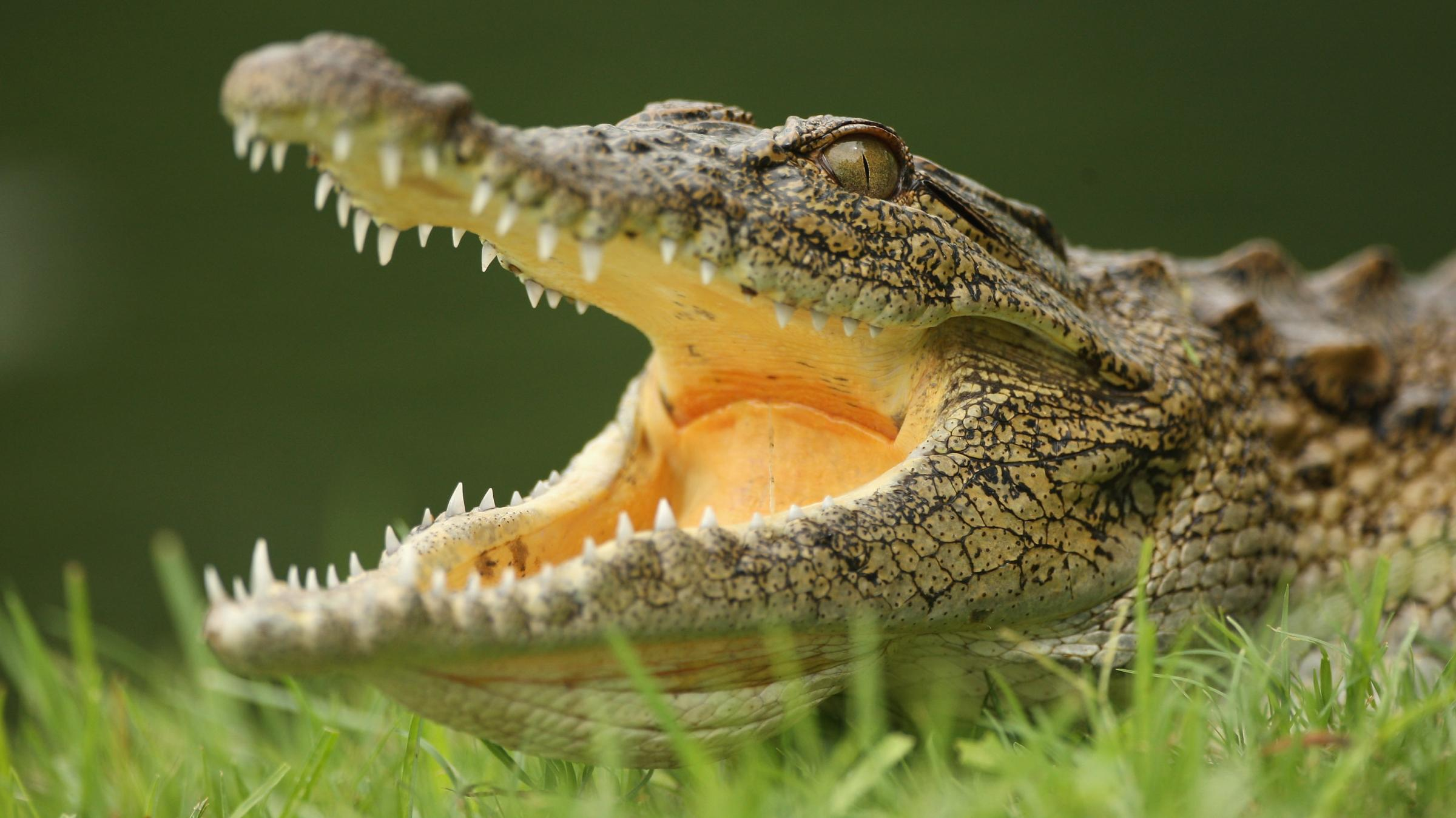 Yikes 15 000 Crocodiles Escape Farm In South Africa Area