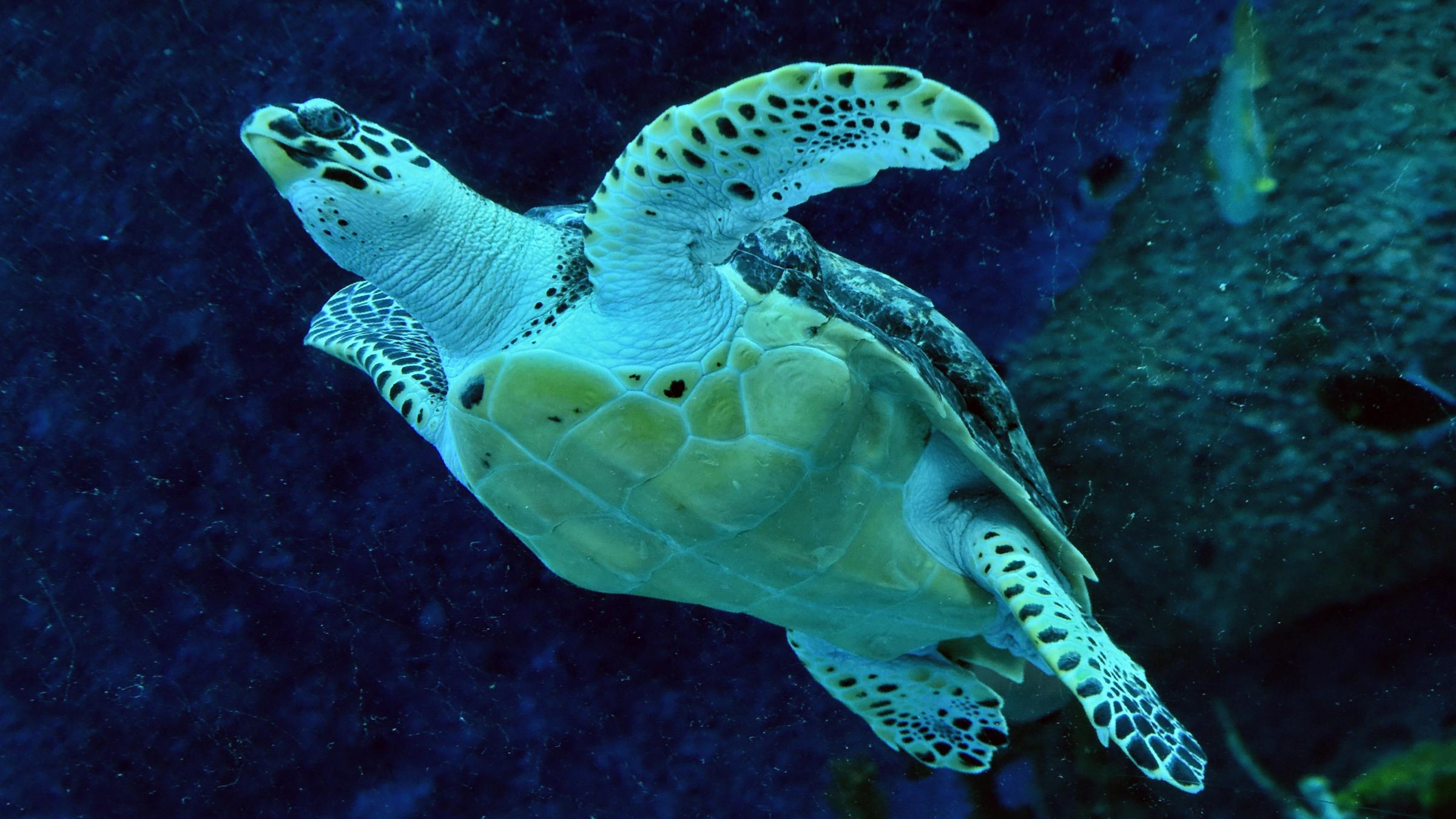 1 Million Animal And Plant Species Are At Risk Of