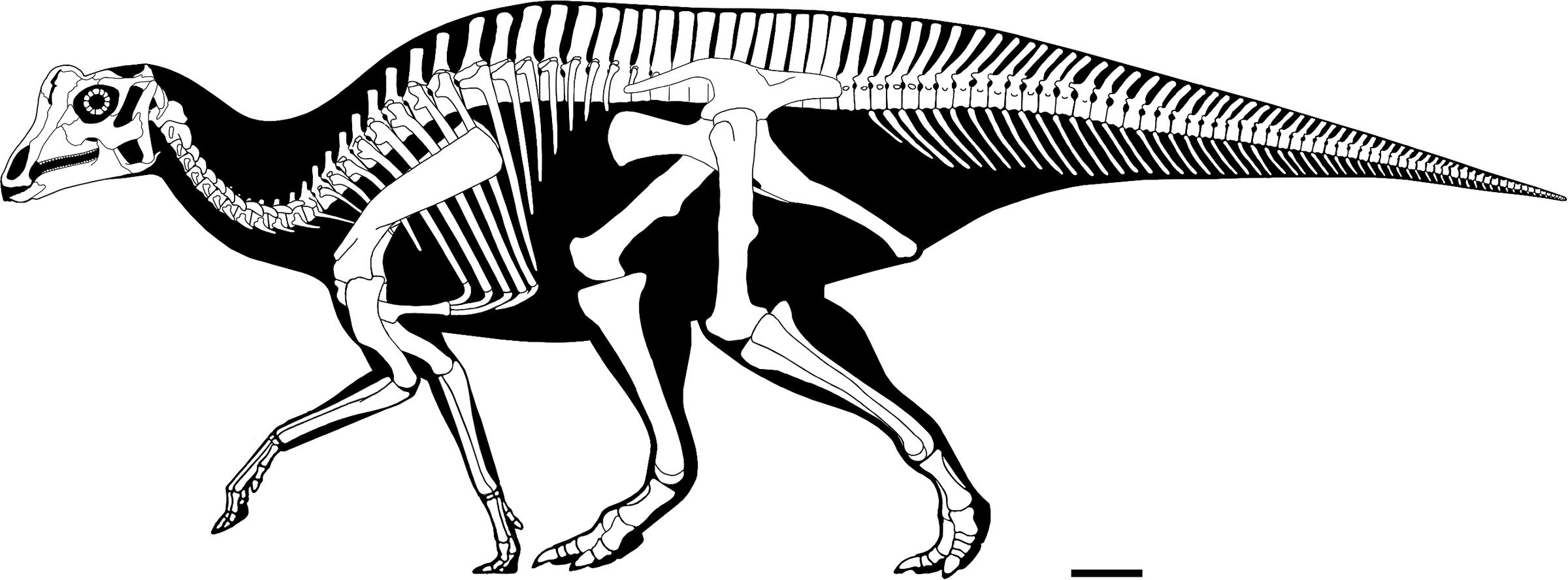 Baby Dinosaur Discovered By A High School Student Has Lots