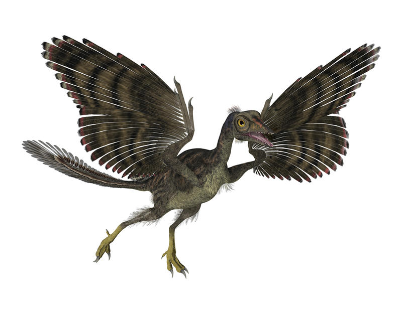 A new exhibit at the Vermont Institute of Natural Science in Quechee explores how birds evolved from dinosaurs.